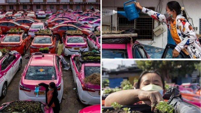 Na krovovima parkiranih taksija posadili su urbane vrtove koji će hraniti tajlandske taksiste