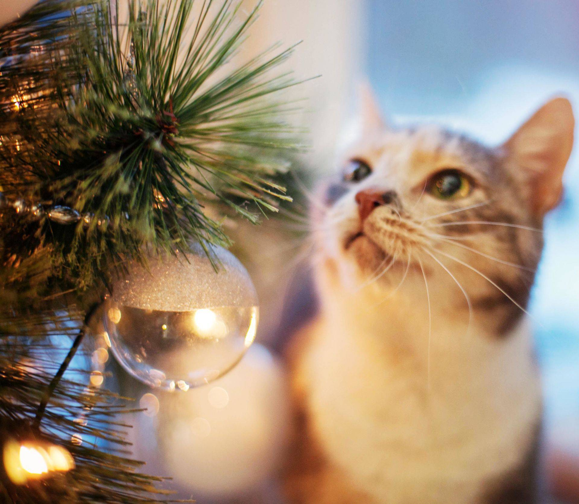 Christmas cat near the tree with lights
