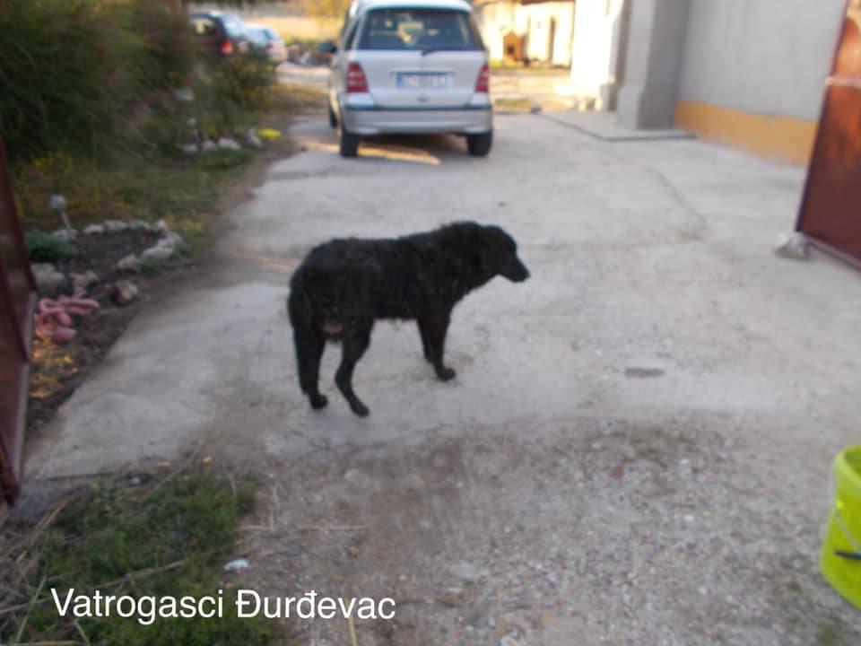 Pas zaglavio u rupi: Vatrogasac se zavukao u cijev i spasio ga