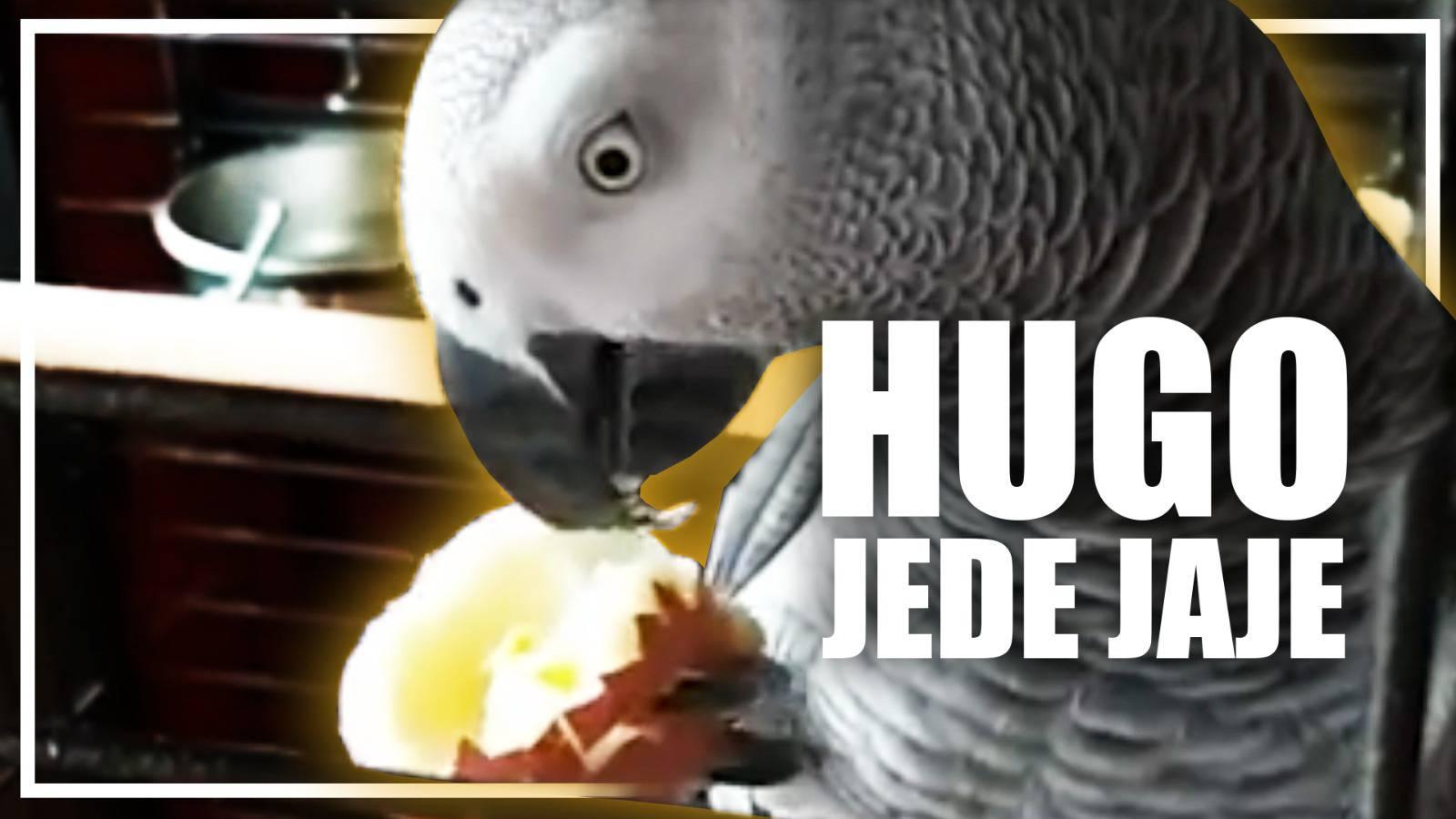 Hugo radi na liniji za ljeto: Najviše voli jesti jaja i jabuke