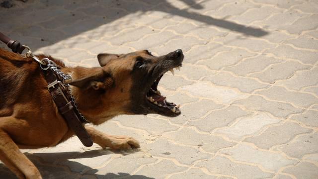 Ne postoji agresivan pas, svaki je odraz svog vlasnika i odgoja