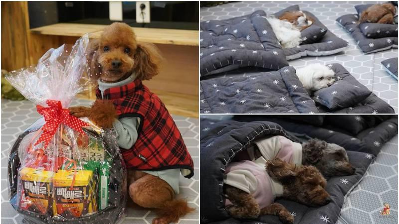 Ove fotke će vam uljepšati dan: Medeni psići imaju svoj 'vrtić'