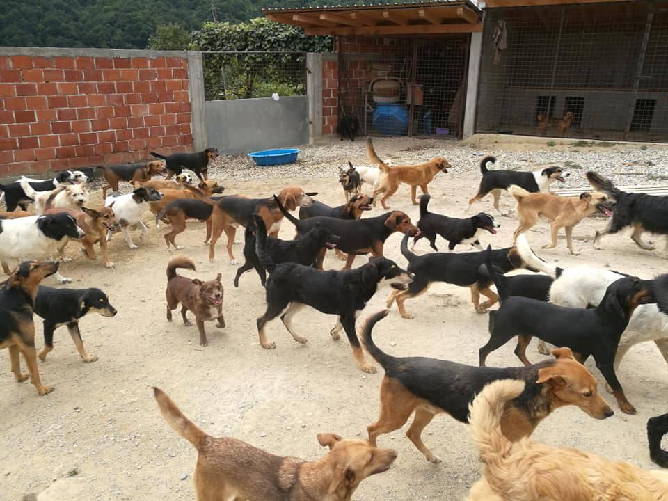 Anima Dvor: 'Fali nam pseće hrane i materijala za gradnju'