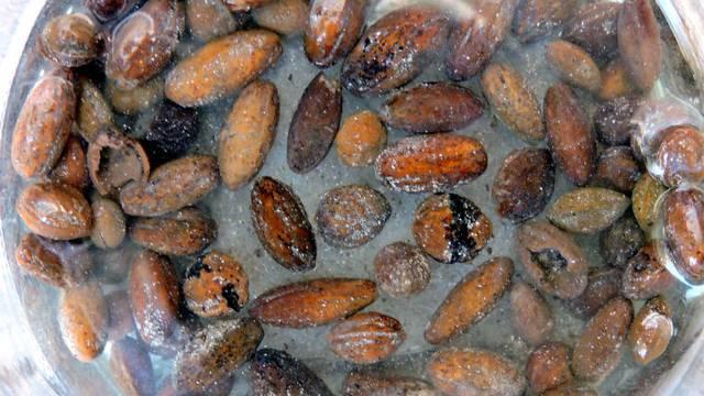 Zadarski arheolozi našli 3500 godina stare koštice maslina