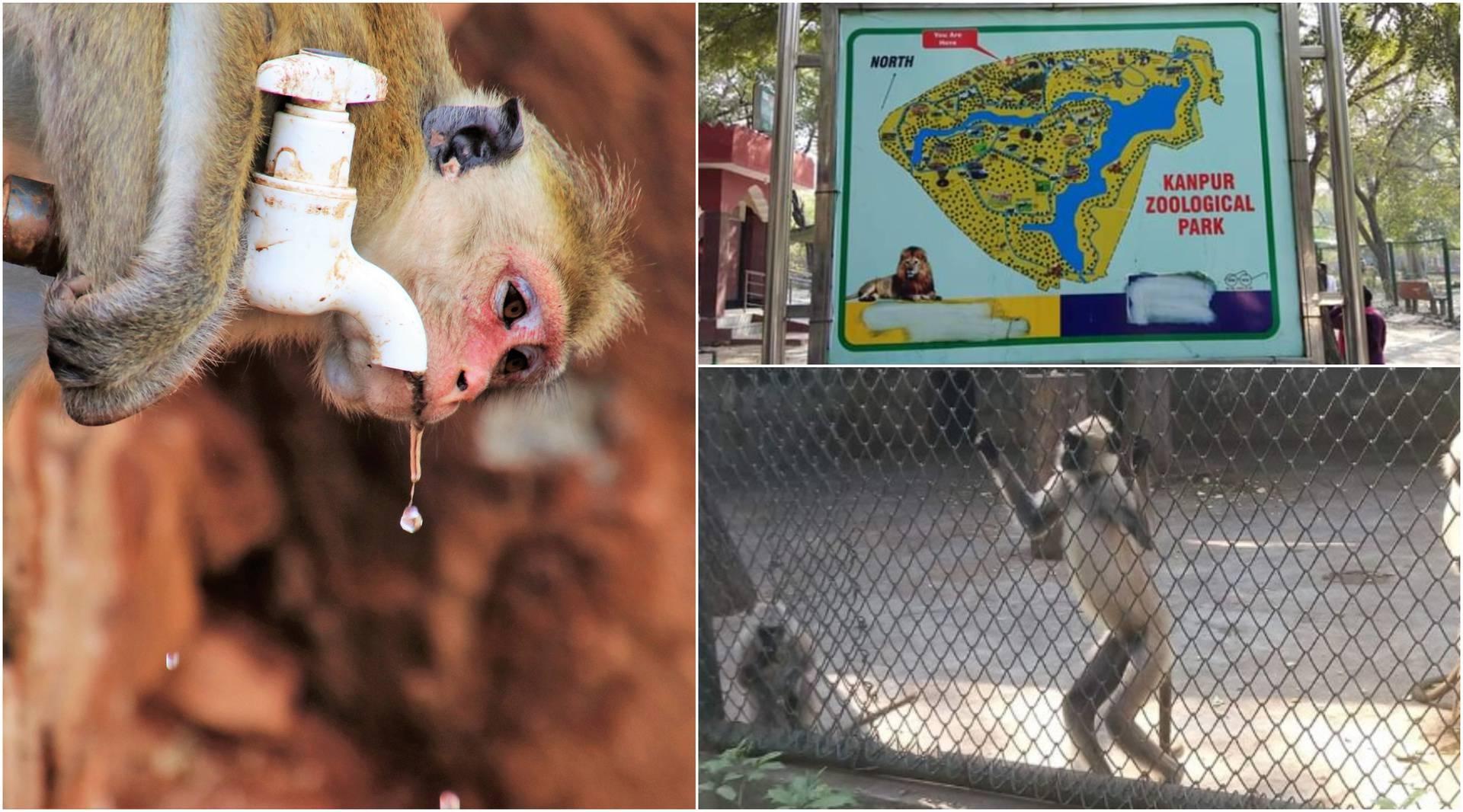 Majmun 'alkoholičar' ugrizao 250 ljudi, jedan čovjek je umro