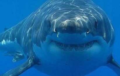 Stručnjaci strahuju od invazije novih vrsta u Jadransko more