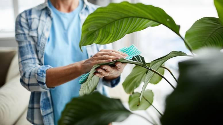 Stalno 'ubijate' biljke? Ovih pet zlatnih savjeta će vam pomoći