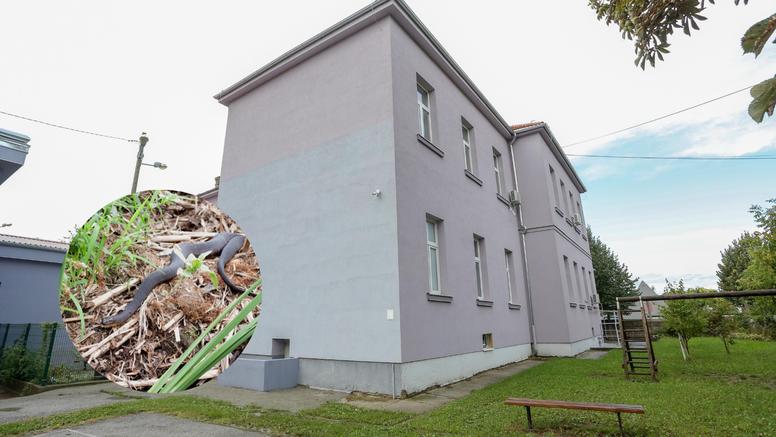Učenici ispred zagrebačke škole pronašli zmiju: 'Prestrašili su se, mislili su da je poskok'