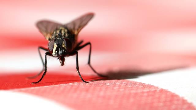Rješenje za svaku napast: Nim za komarce, ocat za mrave...