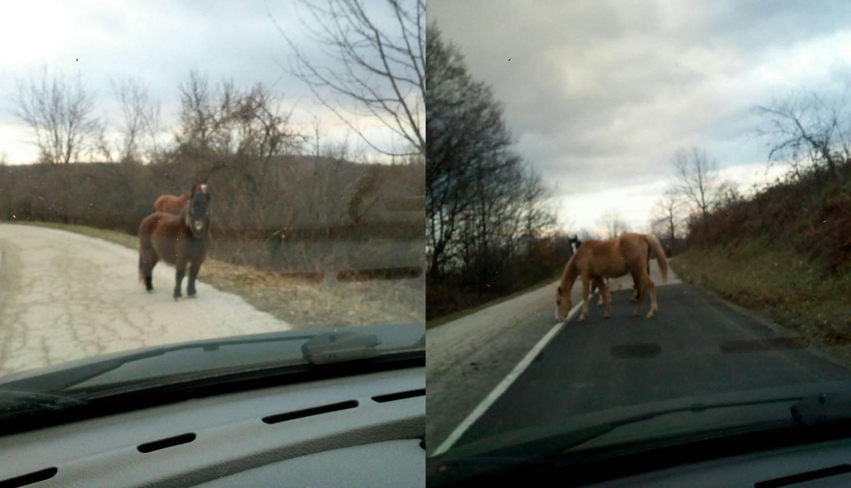 Opasnost: Konji šetaju cestom kod Slunja, vlasnika nije briga