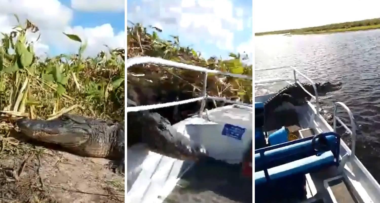 Aligator skočio na ljude