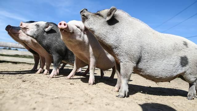 Skupa svinjetina: Mesnice su jeftinije nego trgovački lanci
