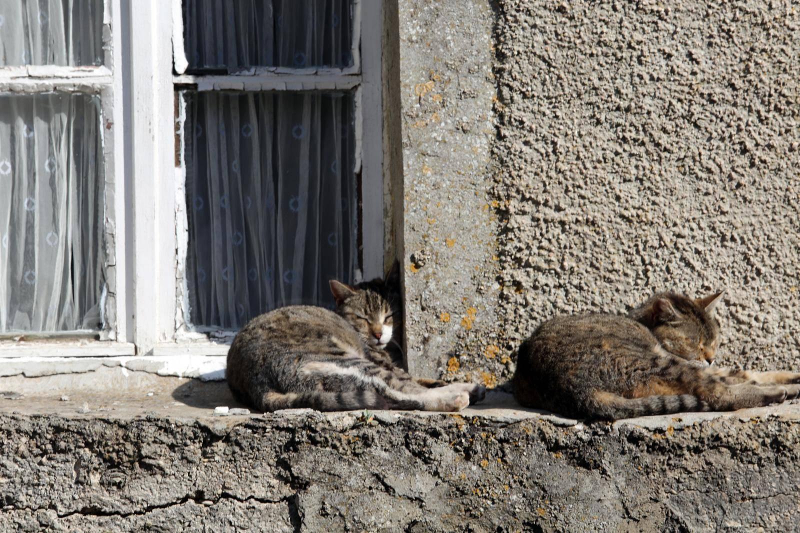 Žena  s Hvara ubila četiri mačke