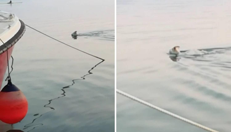'Vidi, morska koza': Plivala je kao pas, kilometar u 15 minuta