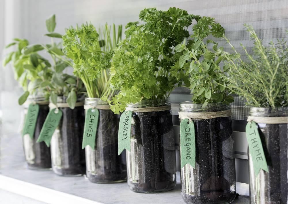 Savjeti za uspješan uzgoj začinskog bilja na balkonu