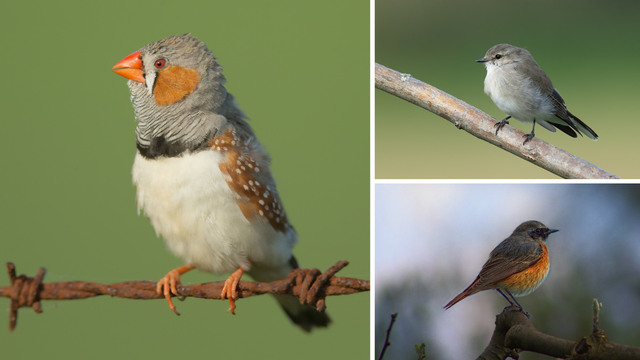 Znanstvenici upozorili: Zbog velikih vrućina propadaju jaja ptica u australskim šumama