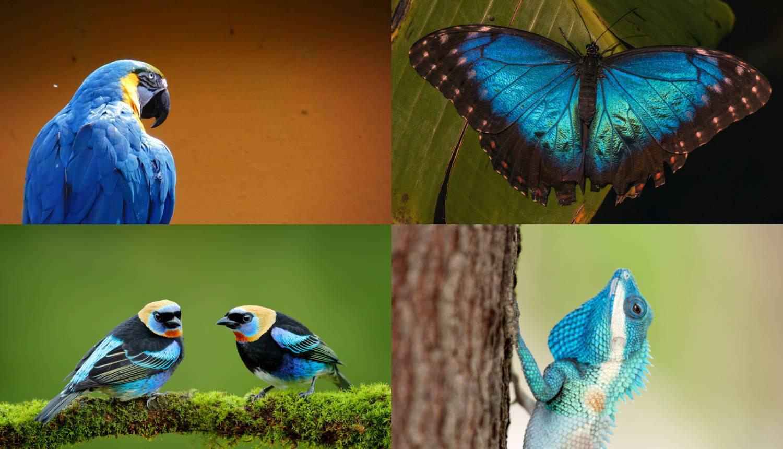 Plava je boja u prirodi rijetka, uglavnom je igra svjetla i sjene