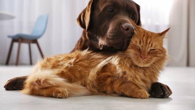 Ove stvari izbjegavajte kod udomljavanja mačke ili psa
