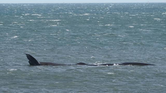 Sperm Whale sighting