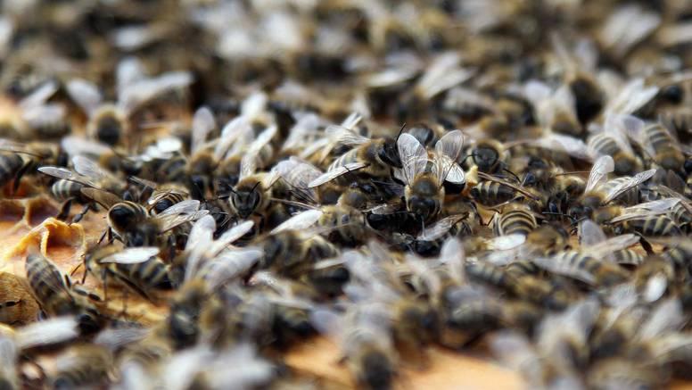 Voćar iz Austrije ide u zatvor: Osuđen je zbog pomora pčela