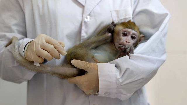 Lab technician holds a monkey cloned from a gene-edited macaque with circadian rhythm disorders in a lab at the Institute of Neuroscience of Chinese Academy of Sciences in Shanghai