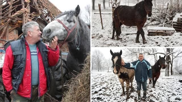 Spasio 16 konja u potresu, ali jedan nije izdržao: Pastuh mi se počeo tresti, srušio se i - uginuo