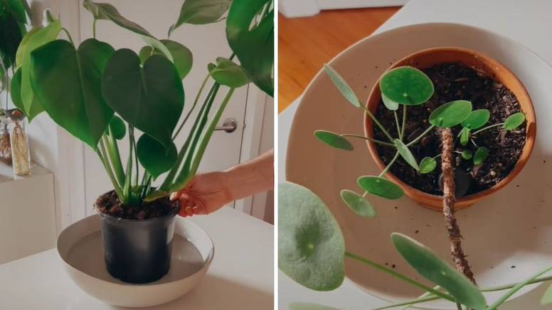 Biljke treba zalijevati odozdo - to je dobro i protiv komaraca