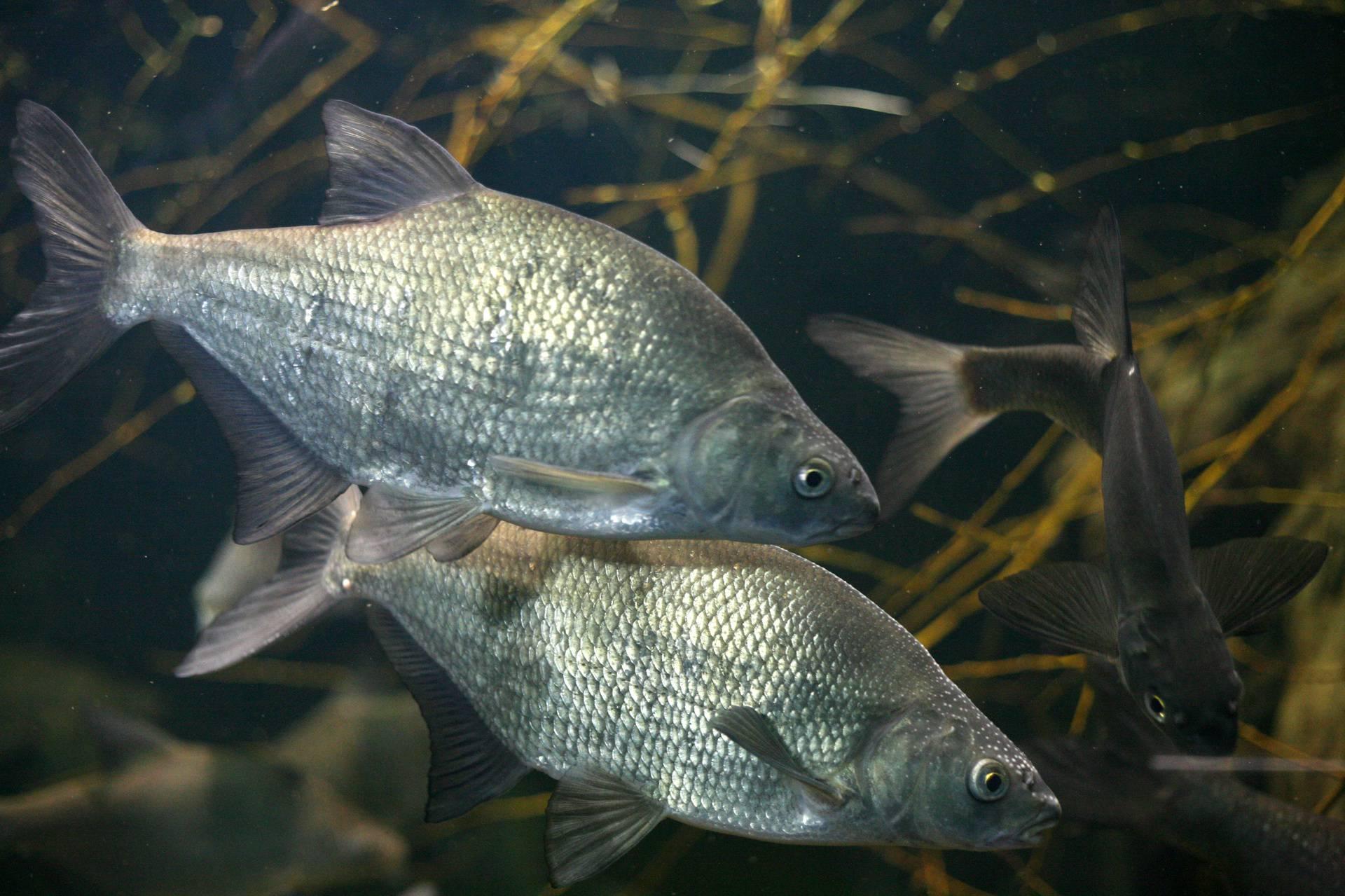 Zatopljavanje prijeti stotinama ribljih vrsta o kojima ovisi svijet