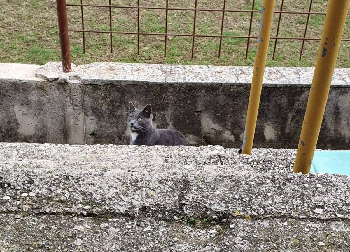 Prošla bolje od kokoši: Maca je prekidala utakmicu u Orebiću