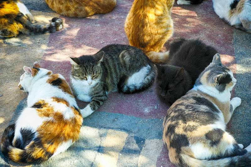 A lots of cats are relaxing.