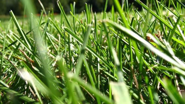 Trava se sije u rujnu: Jeste li već pripremili tlo kako treba?