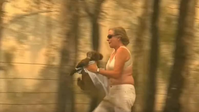 Skinula majicu i spasila koalu iz požara: Zavijala je od bolova