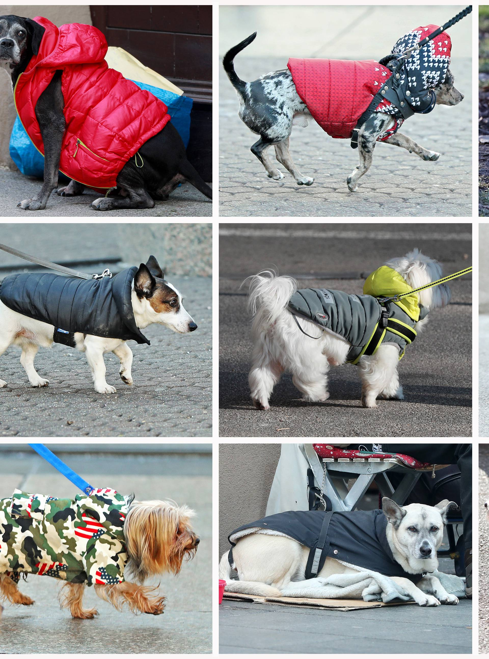 Psi na zagrebačkoj špici
