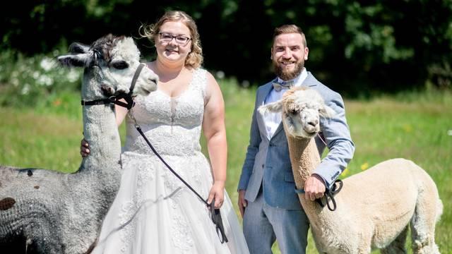 Wedding event at the alpaca stud