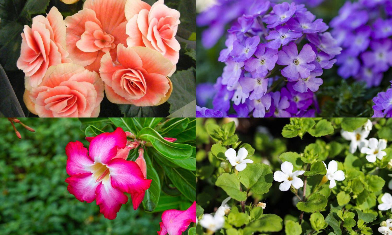Idealno cvijeće za balkon ovisi o tome je li u hladu ili na suncu
