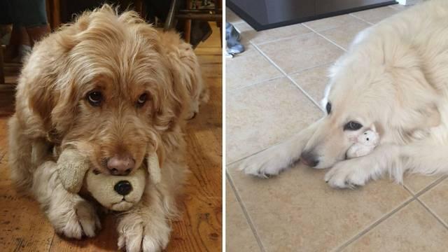Vlasnici ljubimaca otkrili slatke fotografije: To je moja igračka!