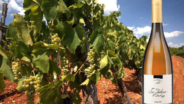 Radi najzdravija vina u Istri, a govorili su mu: 'Nema to smisla, tako su radili još u 19. stoljeću'