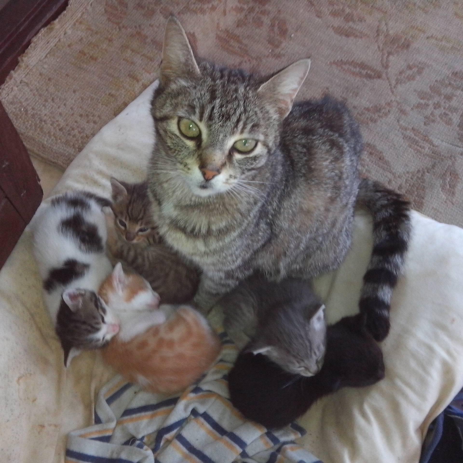 Maca iz Splita omacila pet mačića, svaki različite boje