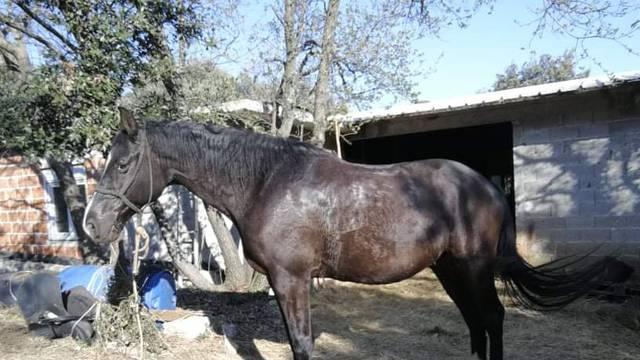 Nestao konj, umiljat, visok 1.70, crni kastrat. Jeste li ga vidjeli?