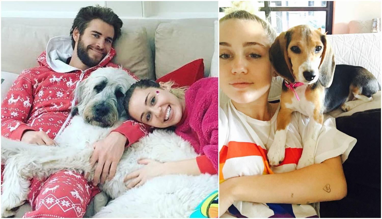 Borba oko skrbništva: Miley ne da Liamu svojih 15 ljubimaca
