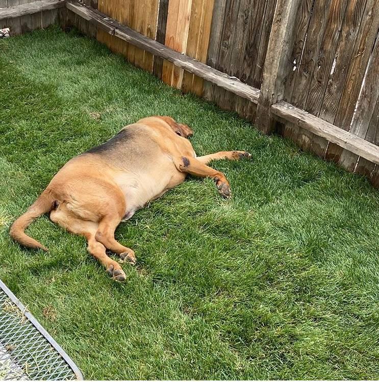 Udomila psa pa mu je napravila dvorište jer ga nikad nije imao
