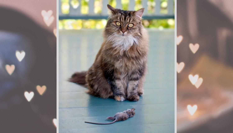 Znate li zašto mačke vole kući donositi razne mrtve životinje?