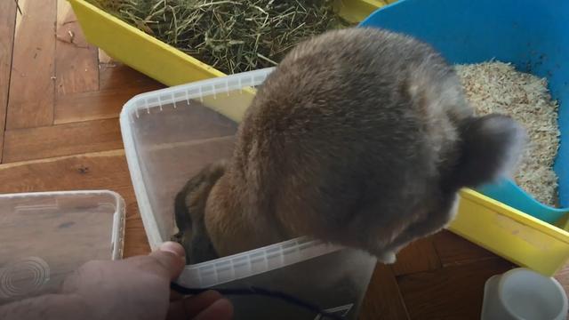 Kunić Marko postane kaskader kada čuje hranu kako zvecka