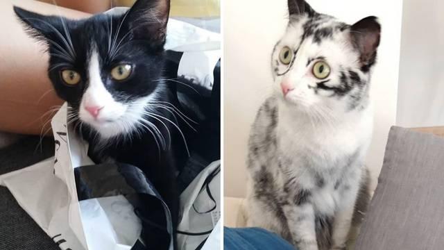 Slatka maca u dvije godine od crne postala bijela zbog bolesti