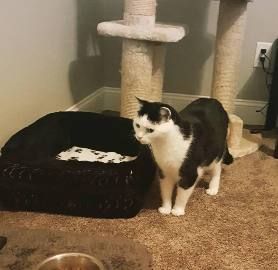 Uzeli najgoru mačku na svijetu: Već ima vlastitu spavaću sobu