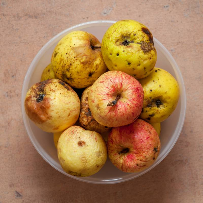 A few red-yellow overripe apples in a round bowl photographed fr