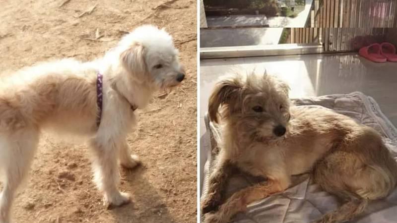 Pas hodao gotovo mjesec dana da pronađe vlasnike koji su ga slučajno ostavili na benzinskoj