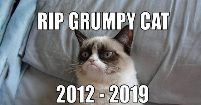 Mačka Grumpy živjet će vječno kao 'meme': Ovo su najbolji...