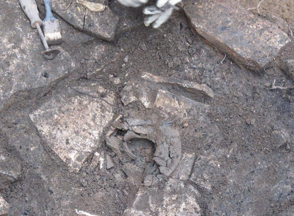 Život prije Rima: U Puli našli pet grobova iz željeznog doba