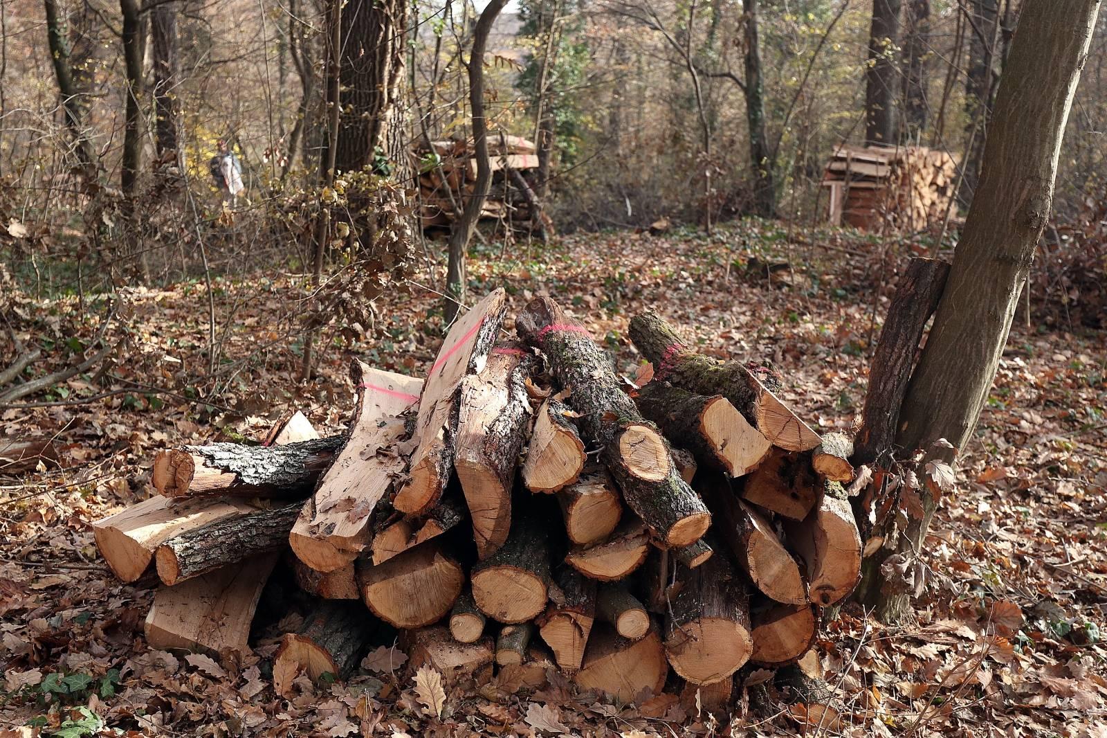 Zagreb: Članovi Odbora za zaštitu okoliša obišli šumu na Tuškancu